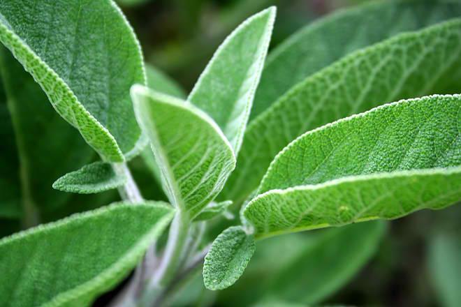 Šest prirodnih lekova za bolno grlo