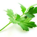 5 prirodnih lekova za gastritis