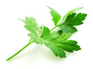 parsley-1319429-640x480