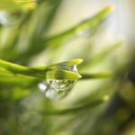 8 stvari koje morate da znate o homeopatiji