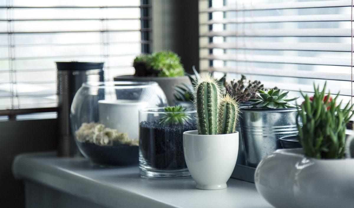 Moderno i toplo: Unesite biljke, stvorićete dom
