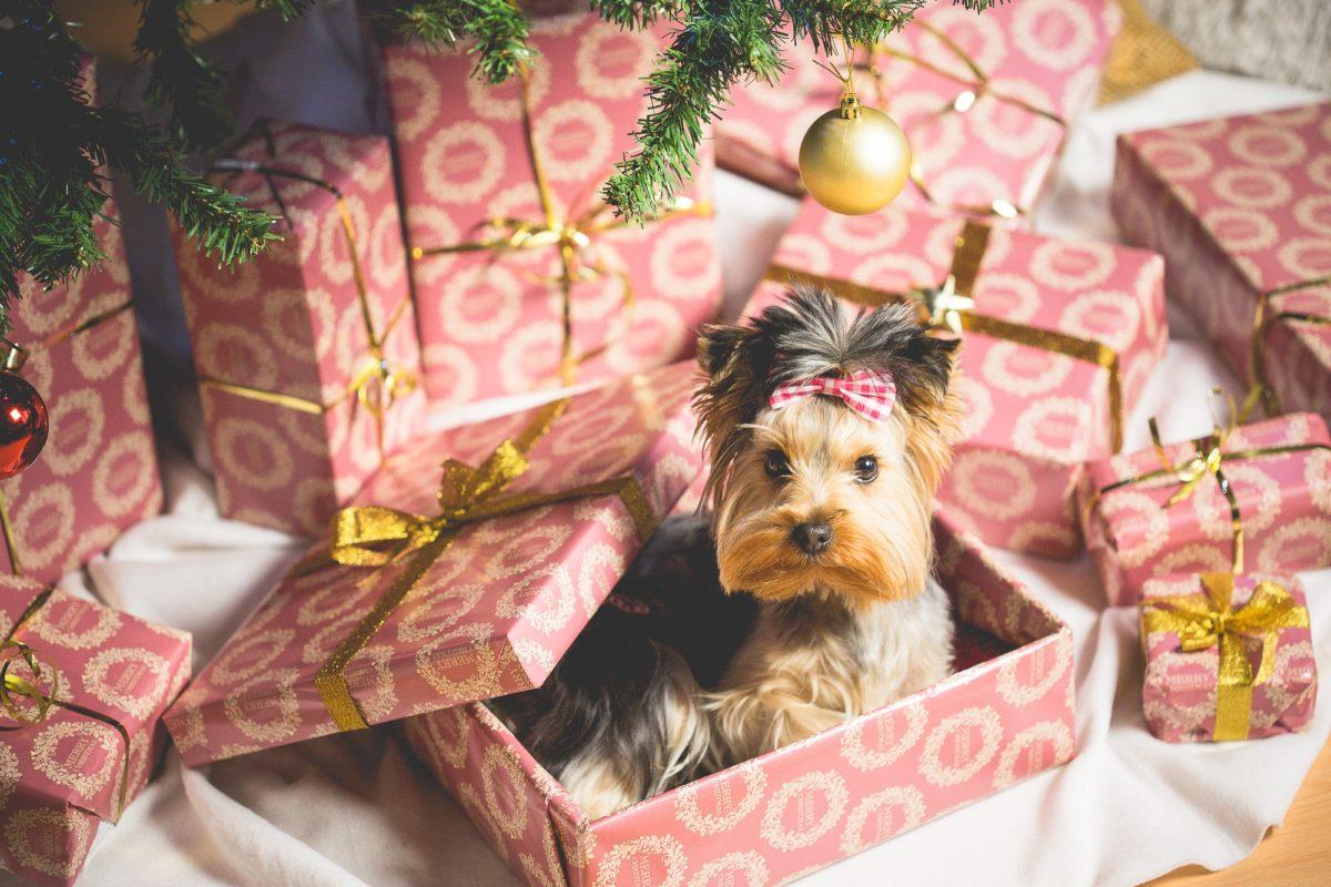 10 razloga zbog kojih je dobro imati psa