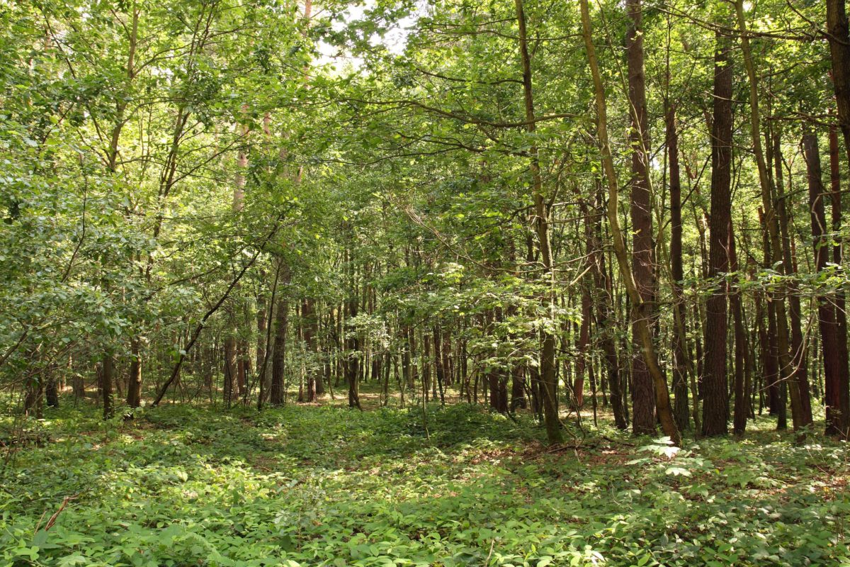 Srbija 24. i 25. maja domaćin Simpozijuma šumske medicine