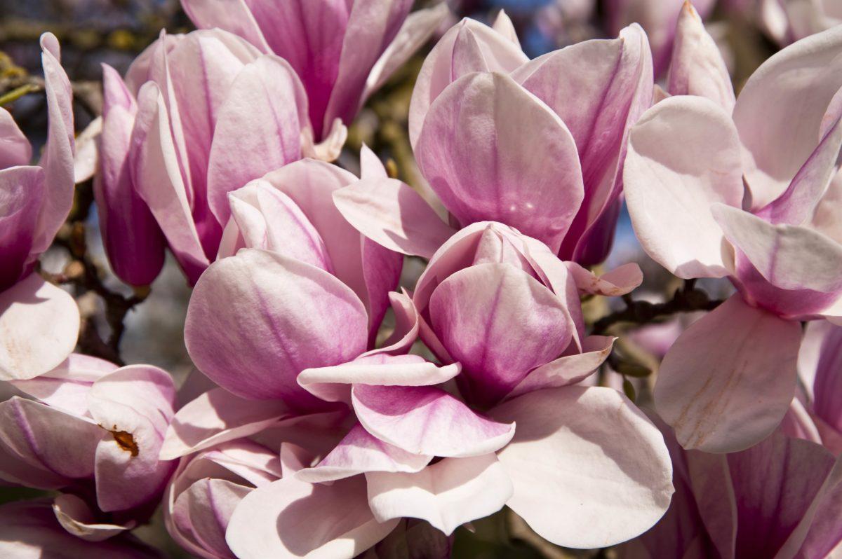 Otkrijte šta vaš omiljeni cvet govori o vama