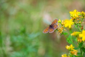 Beautiful butterfly sitting on plant. Insect macro