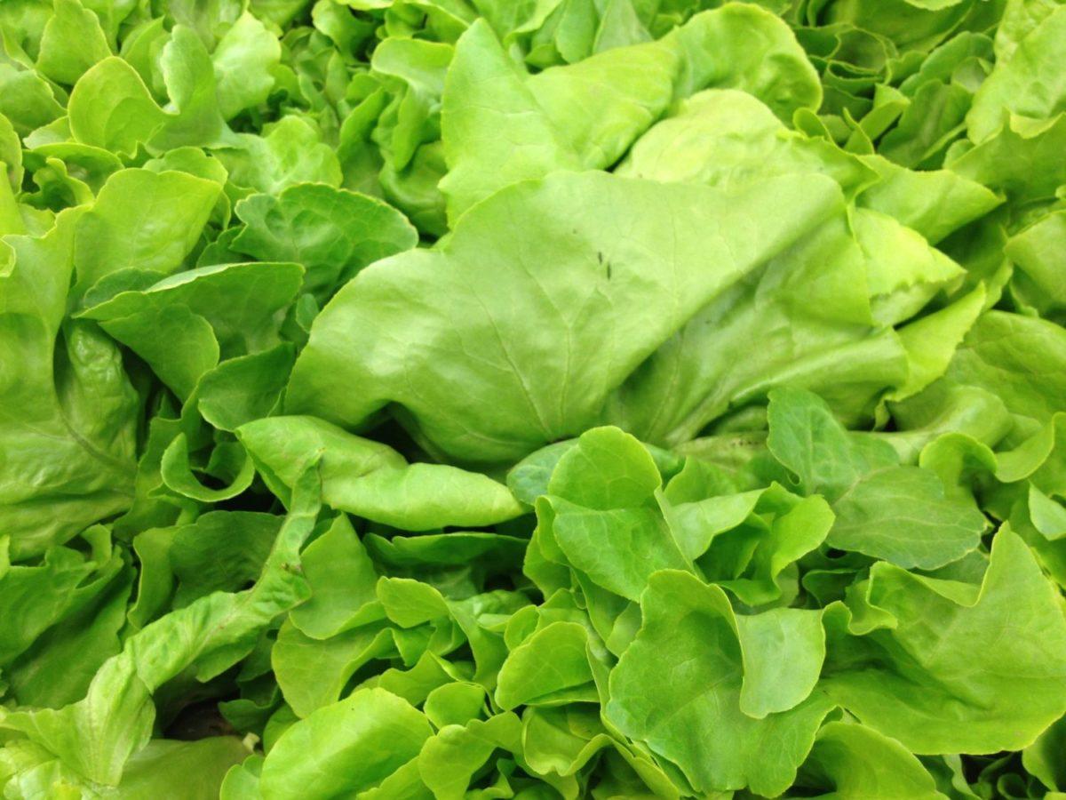 Zelena salata: Rudnik minerala i vitamina