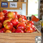 Recept za organsko jabukovo sirće