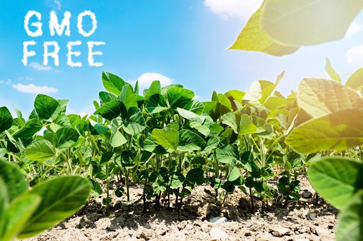 Da li je hrana koju jedemo kvalitetna i bez GMO?