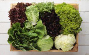 vrste zelene salate