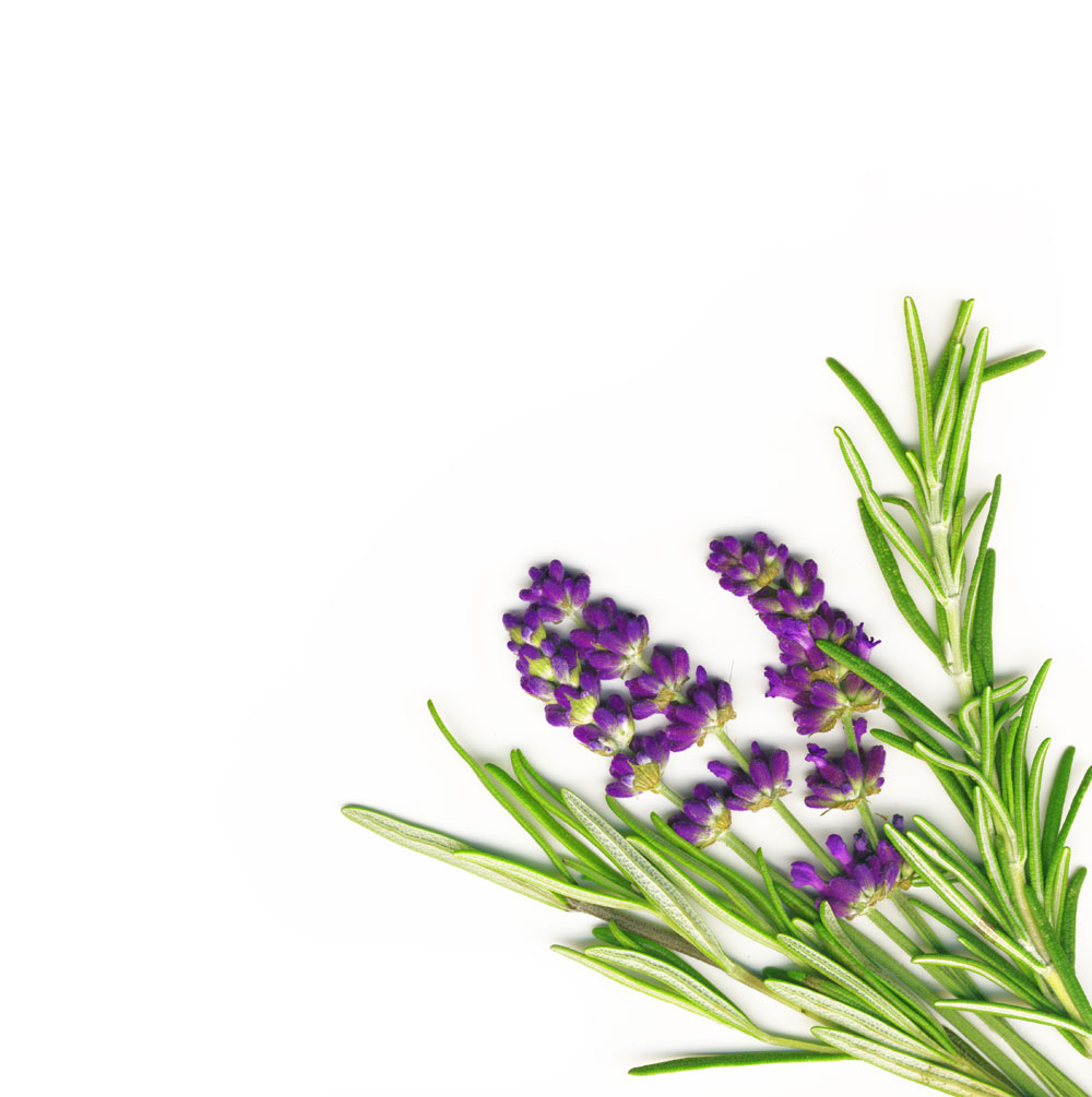 Lavanda – biljka uz koju prestaju kašalj, astma i bronhitis