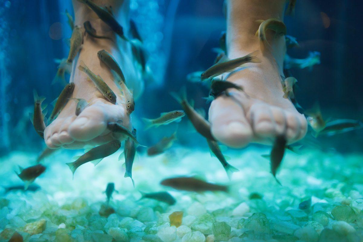 Zašto je svet poludeo za ribljim pilingom stopala
