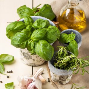 Fresh basil and rosemary in garden pots with garlic and glass bottle of olive oil served on white wooden table. See series
