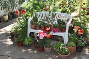 Deo Savinog vrta