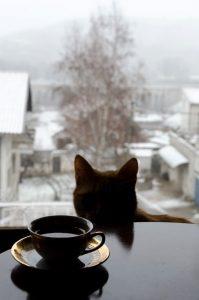 Kafa by Anđela Petrovski