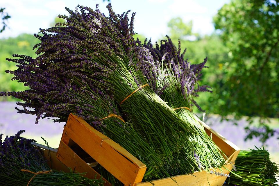 Aromaterapija: Prirodan lek za glavobolju