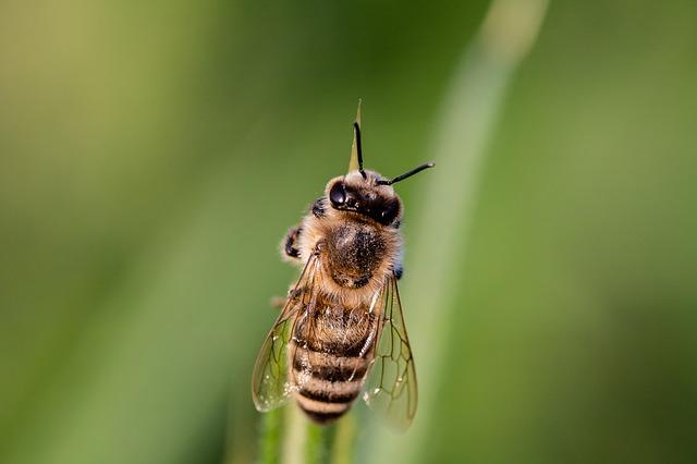 Ovo ne radite ako vas ujede pčela
