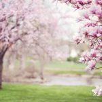 April donosi nove ljubavi