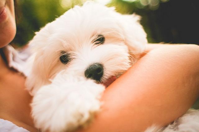 Naučnici pronašli sedam razloga zašto je dobro imati psa