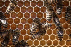 Prirodni balam od pčelinjeg voska za glavobolju