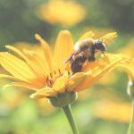Otvara se prvi azil za pčele u Srbiji