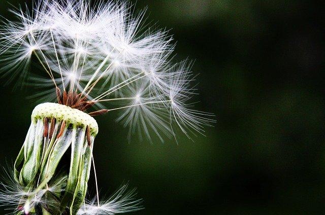 Svaka četvrta osoba na svetu ima neki oblik alergije