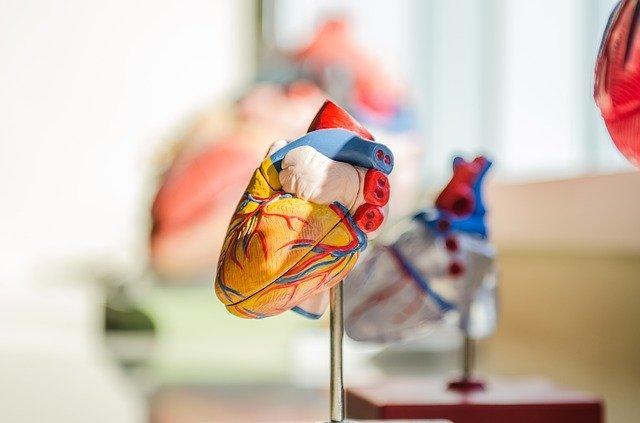 Šta menja oblik našeg srca?