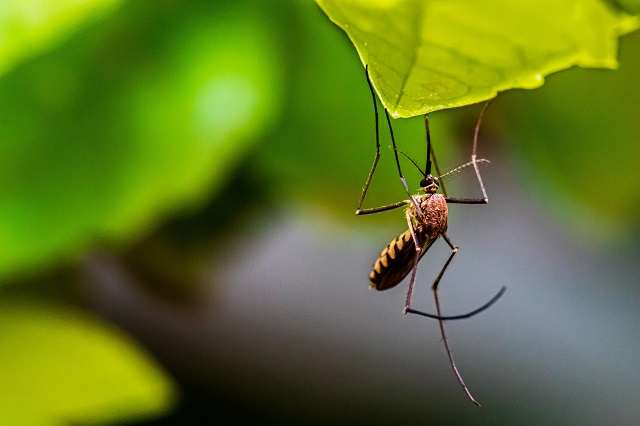 Tip ljudi na koje komarci lete kao pomamljeni