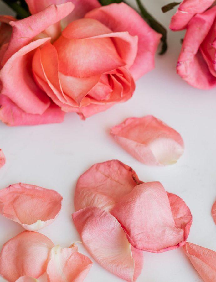 Čaj od osušenih latica ruže čuva zdravlje