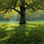 Top 5: Neobične vrste drveća kojima se divi ceo svet