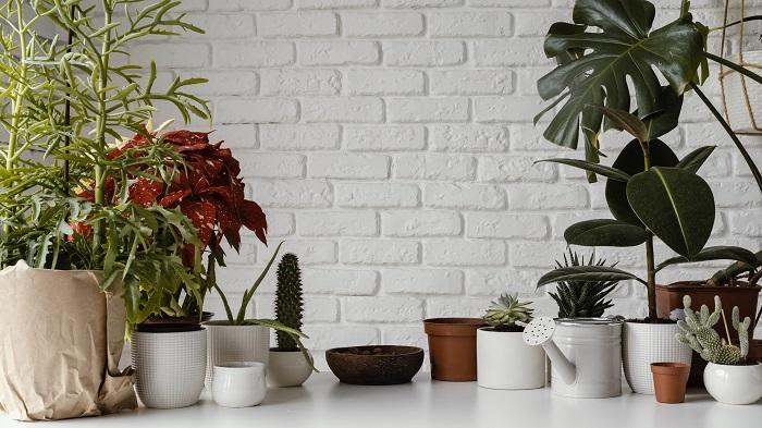 Zalijte biljke ovom smesom, imaće nov sjaj