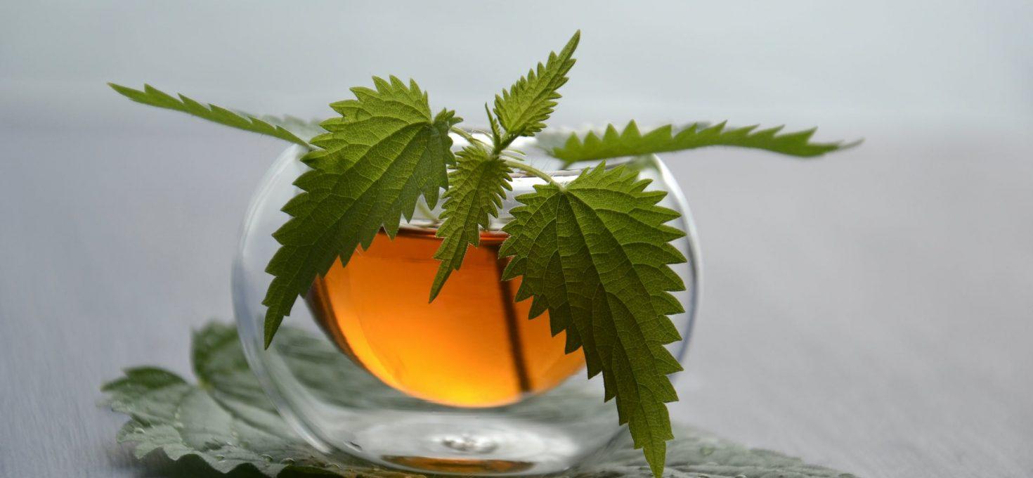 Kopriva je savršena biljka: Spremite čaj, tinkturu, sirup