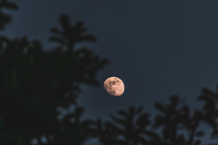 Pun Mesec u Vodoliji? Ribe iz korena menjaju život