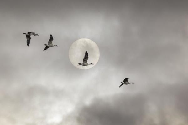 Pun Mesec u Ribama ovako će uticati na sve znake