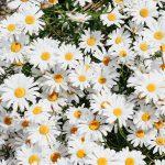 Lekovita svojstva baštenskih korova